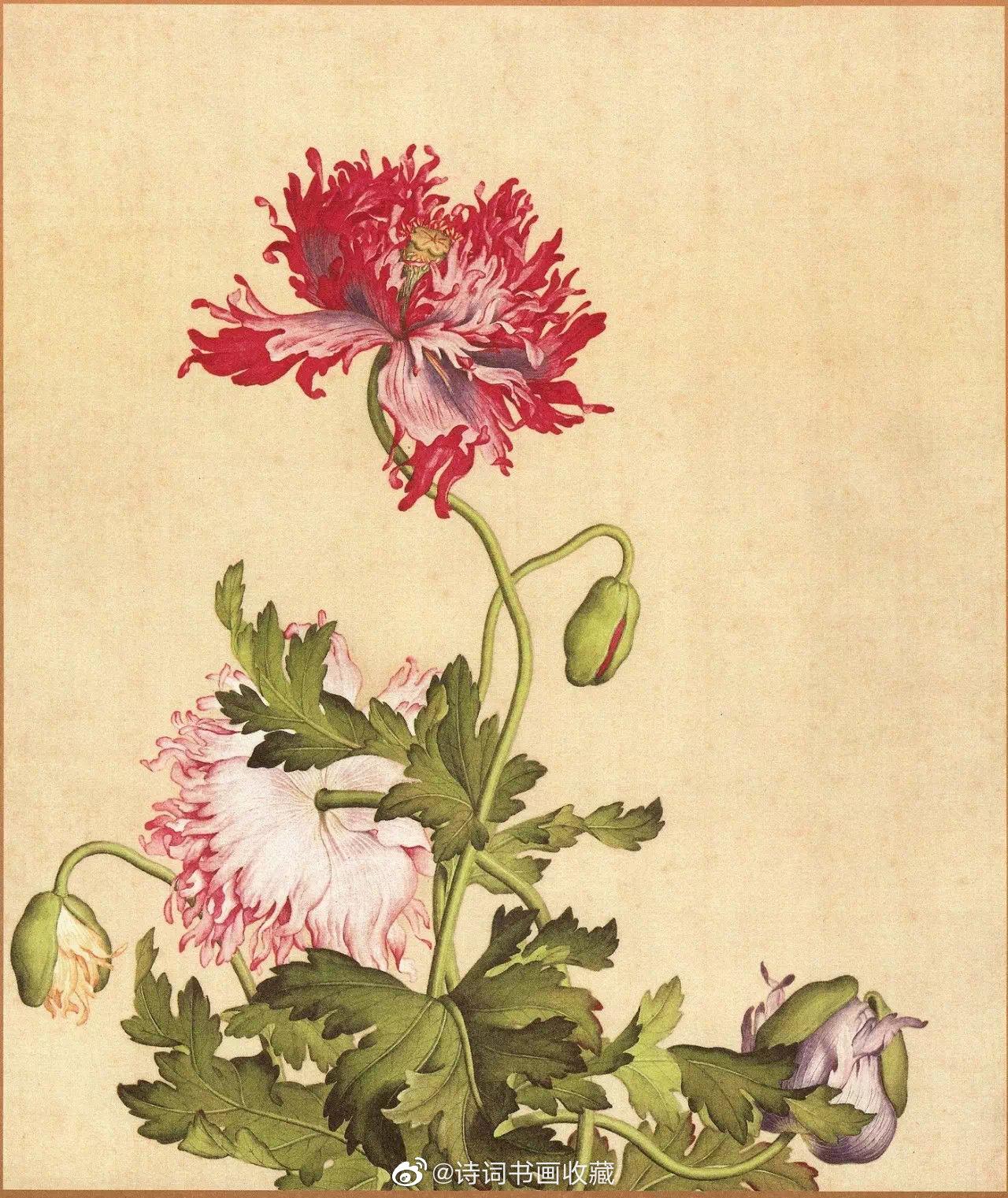 清·郎世宁《仙萼长春图册》欣赏