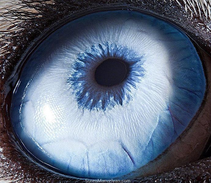 摄影师 Suren Manvelyan 拍摄的动物瞳孔照