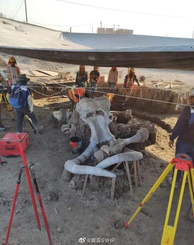 加勒比地区圣卢西亚机场附近工地,考古工作者发现60只猛犸象遗骸
