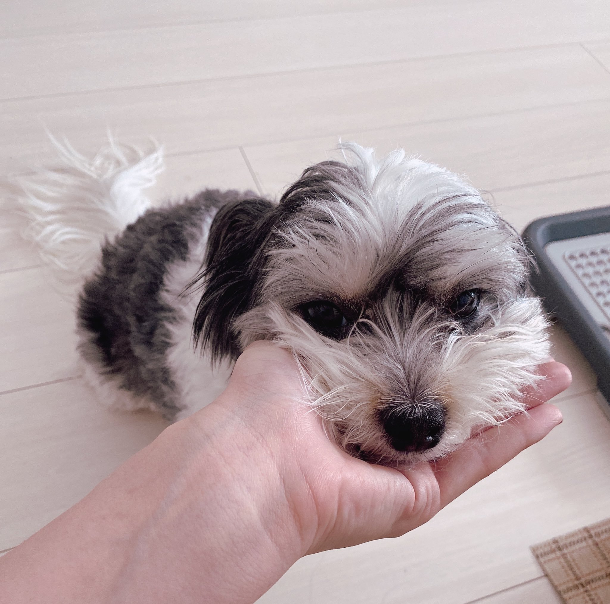 波多野结衣老师家的小狗
