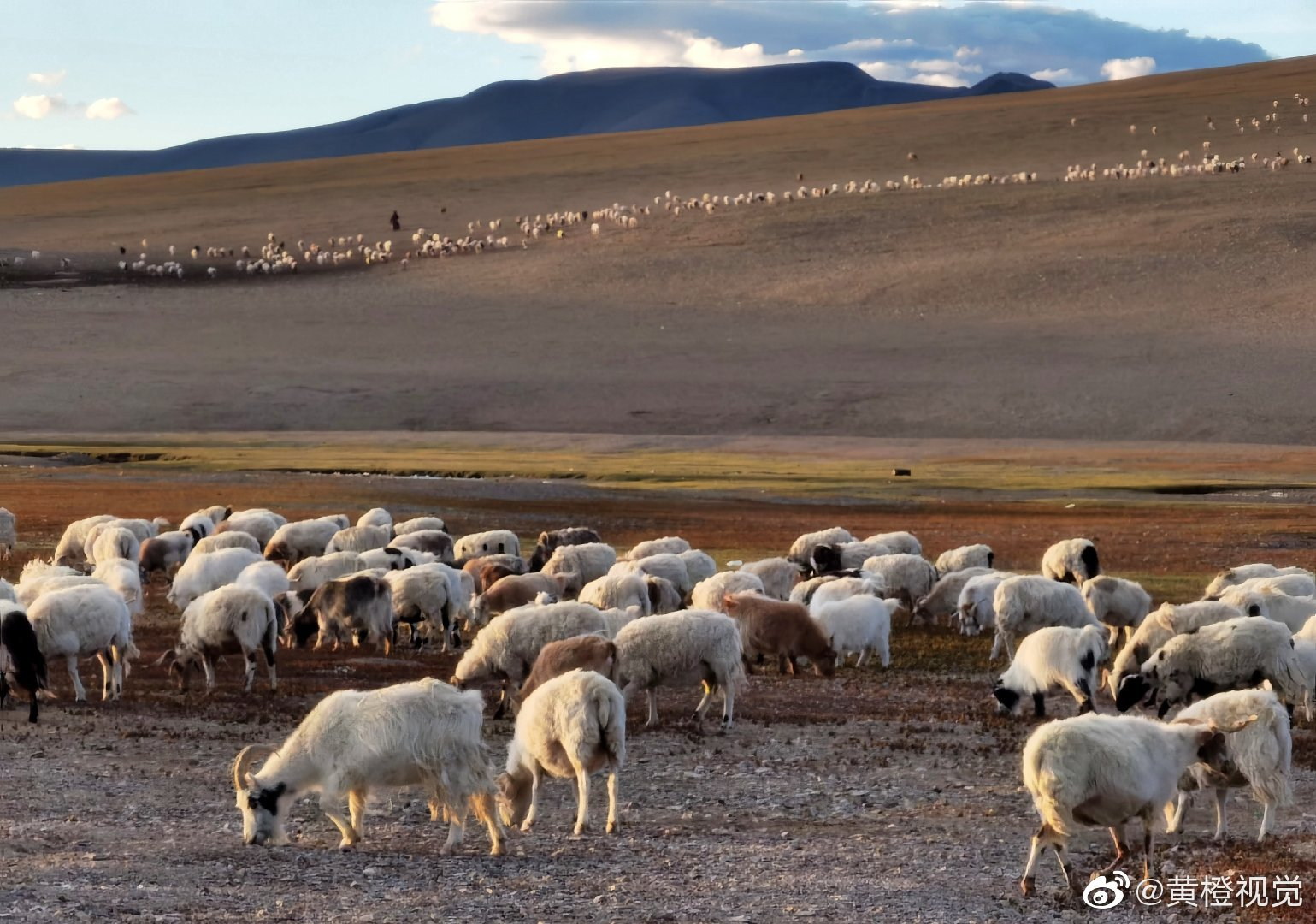 在仁多,我愿做个牧羊人。