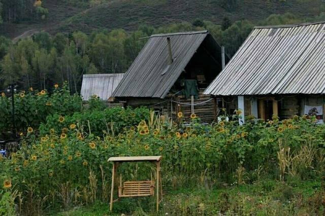喀纳斯·禾木村,蕴藏着图瓦传奇,惊艳了夏日……