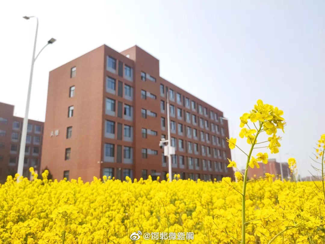 河北工程大学春色丨看庭晓景别,清露花逦迆