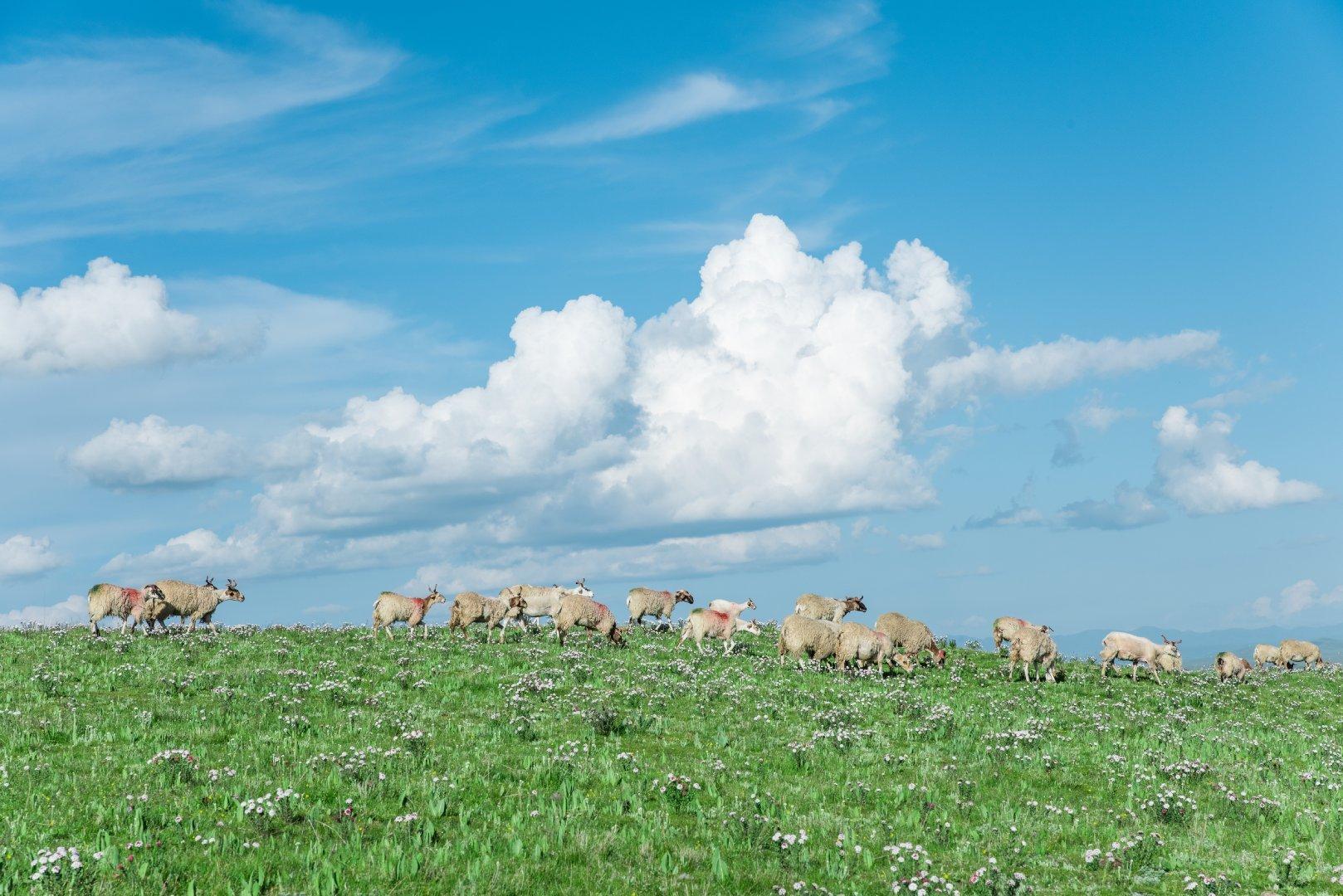 甘南的草原,在晴天下是一幅画