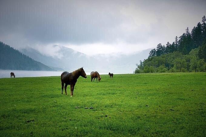香格里拉 | 普达措国家公园 在这里漫步一定很不错