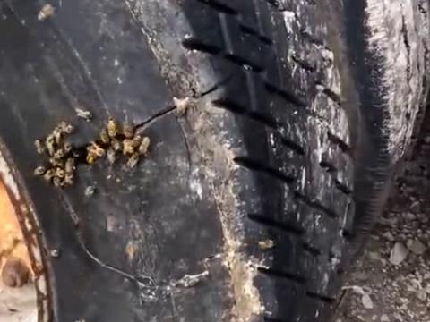 男子发现废弃10年的车有动静,靠近割开轮胎后不淡定了