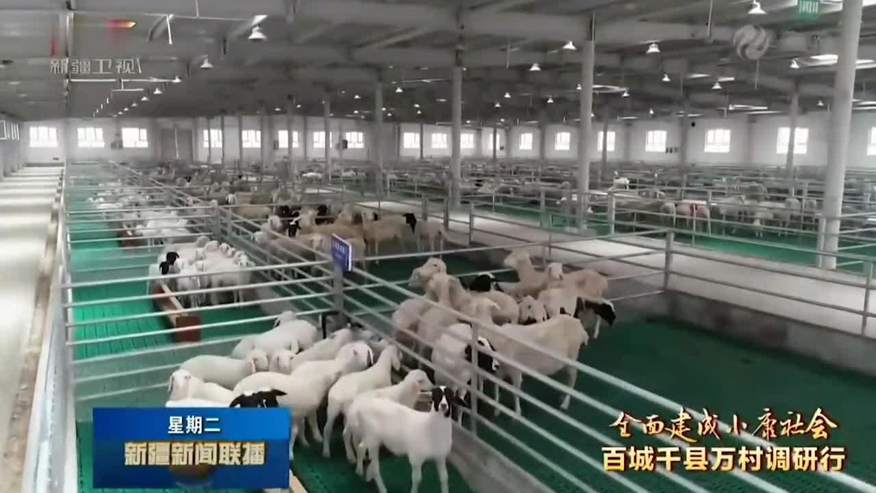 柯坪县推进产业扶贫产业富民