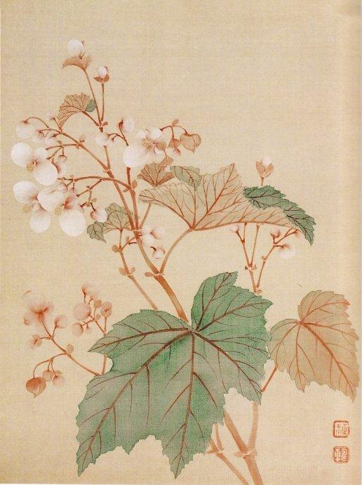 """"""" 清新淡雅,与花传神… """"丨 恽寿平"""
