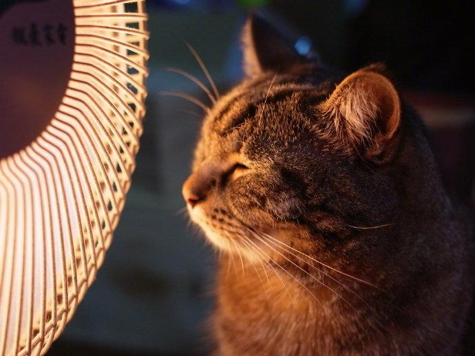 冬天猫咪最喜欢这样啦