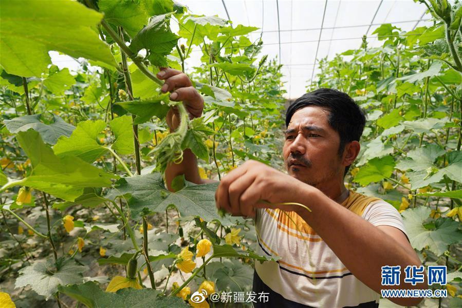 南疆加快设施蔬菜产业发展