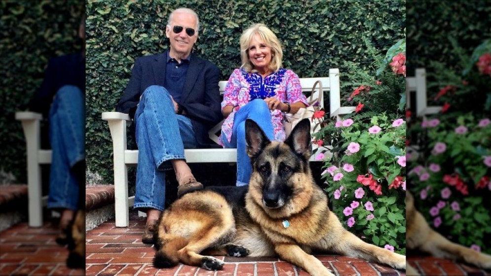 拜登遛狗扭伤 原来白宫的狗狗故事这么多