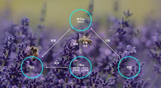 假蜂蜜泛滥,如何鉴别蜂蜜的真假?大多数人都不知道的冷知识