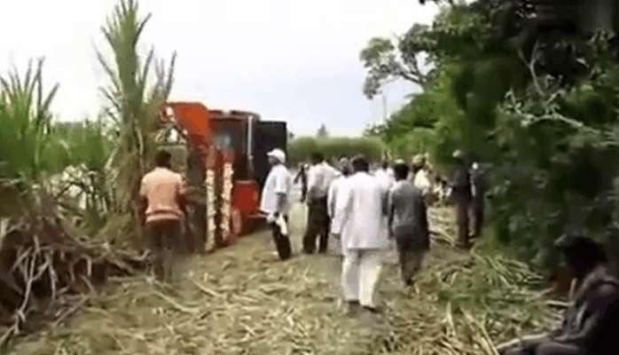 男子收甘蔗听见地里传来叫声, 最后果断将其救下
