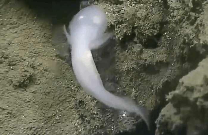 """国外男子深海沟中发现""""不明鬼鱼"""", 细看后屏住了呼吸"""