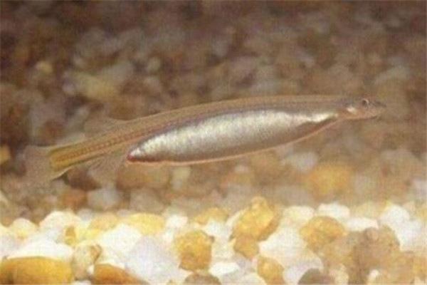 地球上10大毒鱼,牙签鱼号称吸血鬼,石鱼和狮子鱼会致命