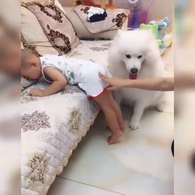 看到妈妈伸手打宝宝,狗狗毫不犹豫做出的这个小动作,真是太暖了