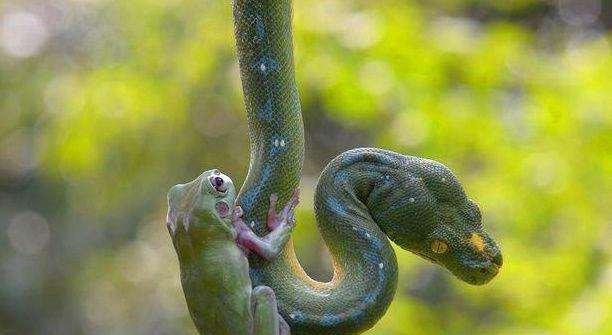 摄影师晒蛇背雨蛙照,被网友赞不绝口,拍摄过程曝光后,大怒