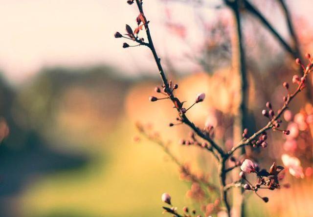 人生若只如初见,也就不会为你流泪了
