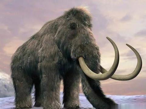 考古发现猛犸象骨头组成的神秘环形结构