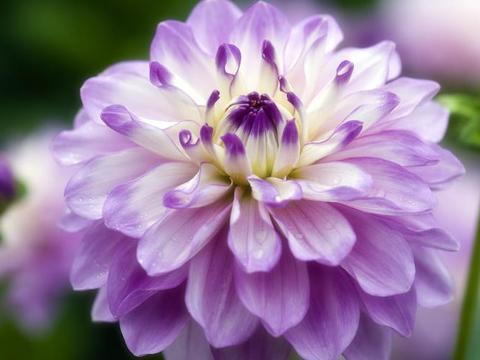 适合家养的3款花,比玫瑰更漂亮,全年开花不断,阳台养出小花园