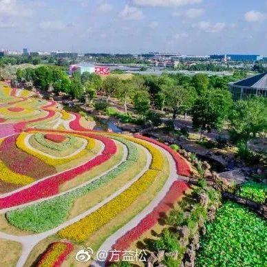 南通洲际绿博园的春天,绿草如茵,花开烂漫,太美了!
