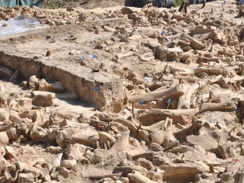 俄罗斯发现60只猛犸象骸骨堆成的建筑,或为象骨祭坛