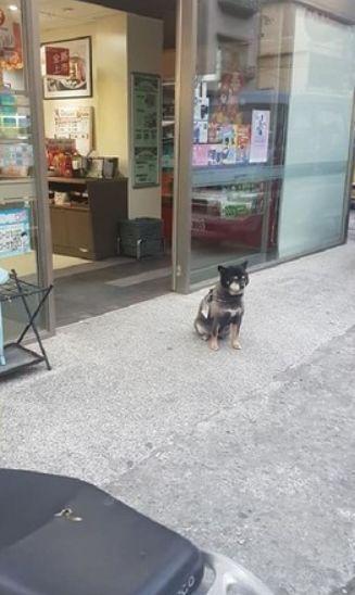 狗在超市门口乞讨被喂成猪,主人无奈挂牌:减肥中,请不要喂我