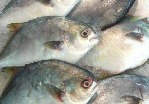 海边买鱼时,专挑这4种,便宜又好吃,懂的人不是本地人就是行家