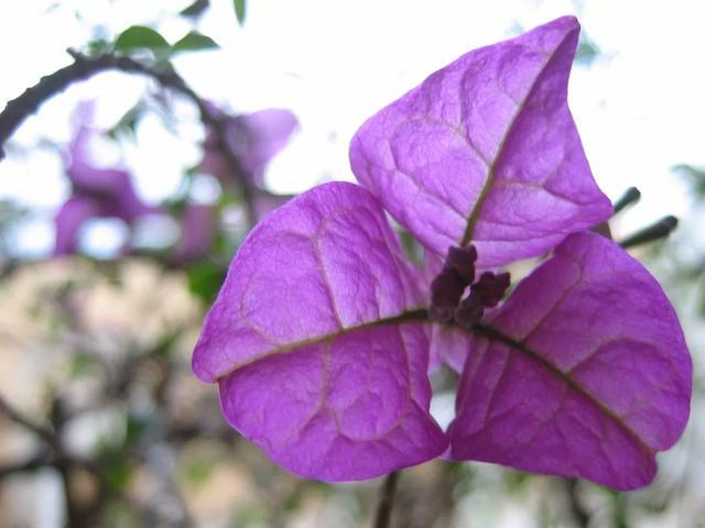 有种植物是出了名的晒不死,夏天热浪对它们来说无非是挠痒痒