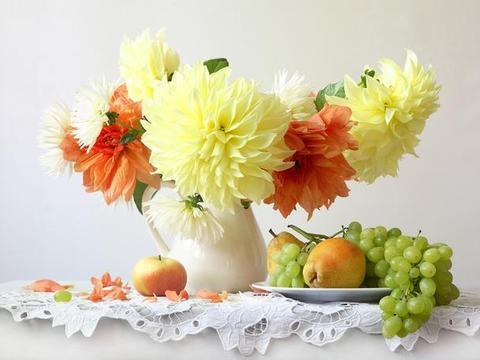 品种繁多的大丽花,根如地瓜颜色特别多,皮实好养