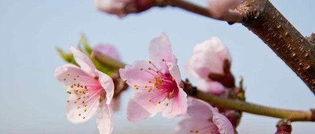 美炸!三月南京高校花海即将惊艳,你的校园上榜了吗?