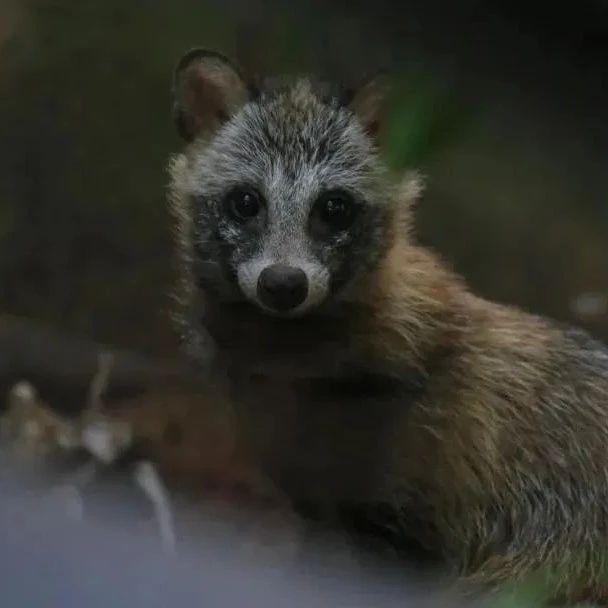 【提示】金山区全区域成为上海第4个野生动物禁猎区!