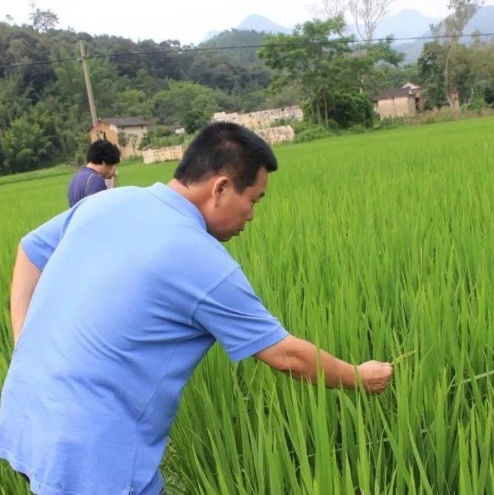 通过发挥高校学科优势开展科技精准扶贫——华南农业大学对口帮扶中心村案例