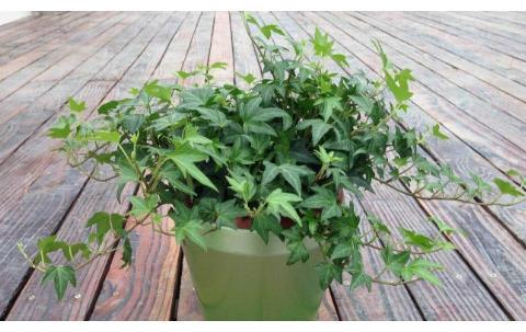 3种花,好养易打理,还能杀菌除尘,春季室内养一盆,满屋飘香