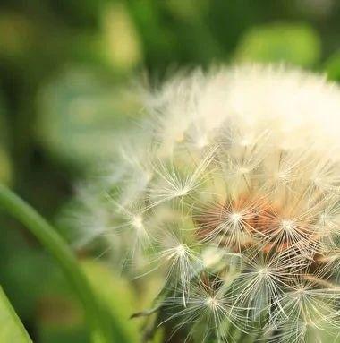 """【真情战""""疫"""" 为爱发声】丨龙彼德《春天,正大步向我们走来》(朗诵:周桂康)"""
