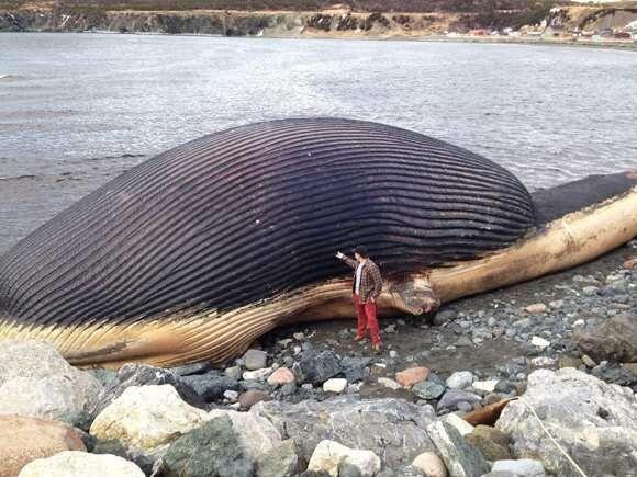 女子在海滩游玩发现巨大神秘动物,肚子里都是瓦斯,随时可能爆炸