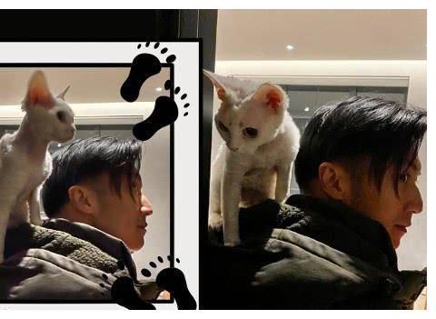 谢霆锋晒与宠物猫亲密合影照,被吐槽:爱猫胜过爱自己亲儿子!
