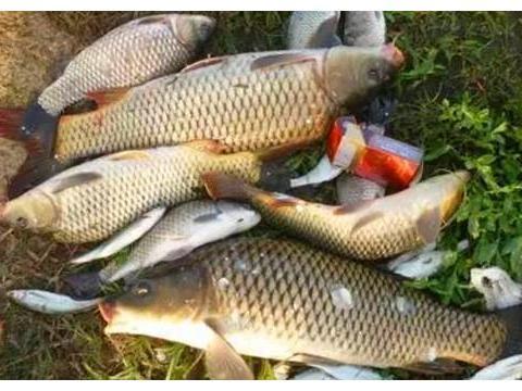 手竿钓鲤鱼,天气和钓点的选择技巧,钓不到鱼,跟这些关系很大