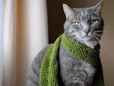 流浪猫冰天雪地用身体温暖2个月大的弃婴救其性命,获英雄猫称号