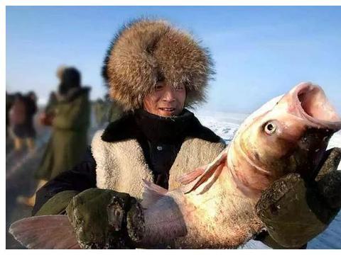 著名的查干湖冬捕,为啥每次都能捞上这么多的鱼?真相让人不齿