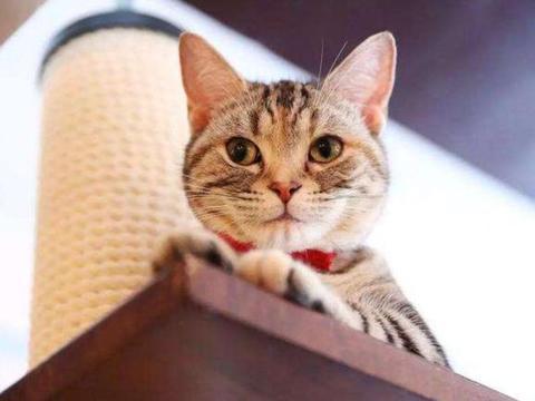 猫咪可以吃甜食吗?网友:和人一样甜食吃多了会发胖,最好少吃!