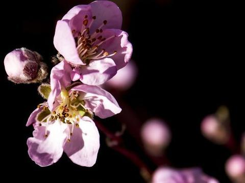 4月份开始,4属相喜事连连,迎财神接贵人,事事顺心如意