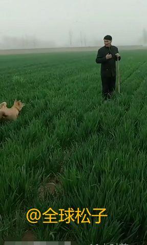 大衣哥身穿中山装现身麦田中歌唱,狗狗突然闯入画面逗趣