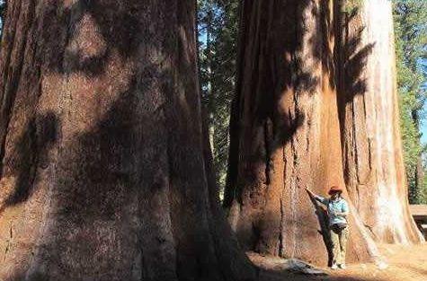 """世上唯一被誉为""""将军""""的神树,树龄高达3200年,吸引无数人朝拜"""