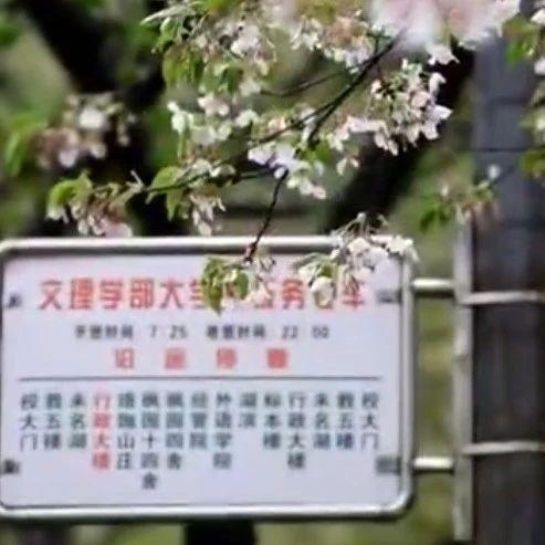 武汉的樱花谢幕了,奶茶订单却3天增8倍!还有这些好消息...