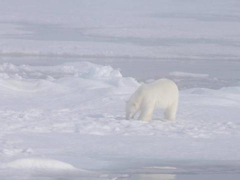 科学家预测,全球变暖将停止冰河期来临,人类能存活的可能性不大