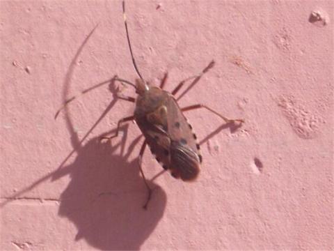天津灭蚂蚁服务公司 专业除臭虫都啥方法