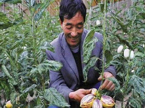 山西大爷种植一种水果,亩利润近万元,为啥种两年就不干了?