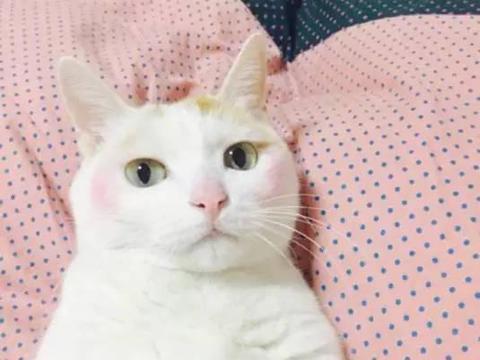 拿猫星人化妆示范,涂了腮红简直太美