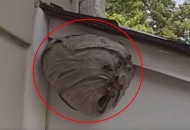 农村老汉的屋檐下,有一窝超大的马蜂窝,老汉直接拿来吸尘器!